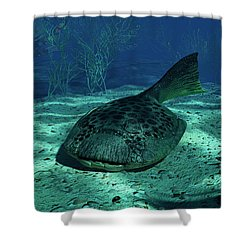 A Drepanaspis On The Bottom Shower Curtain by Walter Myers