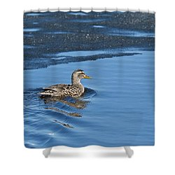 Shower Curtain featuring the photograph A Female Mallard In Thunder Bay by Michael Peychich