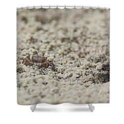 A Fiddler Crab In The Sand Shower Curtain