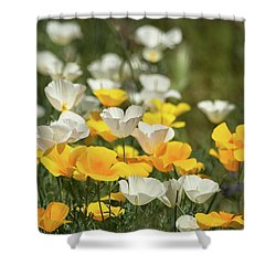 Shower Curtain featuring the photograph A Field Of Golden And White Poppies  by Saija Lehtonen
