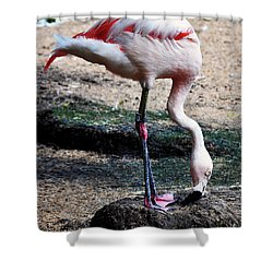 A Flamingos Take On A Headstand Shower Curtain