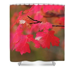 A Flash Of Autumn Shower Curtain