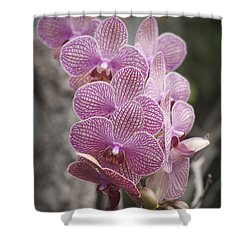 A Flight Of Orchids Shower Curtain by Morris  McClung