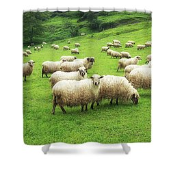 A Flock Of Sheep Shower Curtain