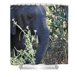 A Flower  A Elephant Shower Curtain