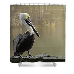 A Foggy Pelican Sunset Shower Curtain