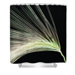 A Foxtail Seed In Flight - Macro Shower Curtain by Sandra Foster