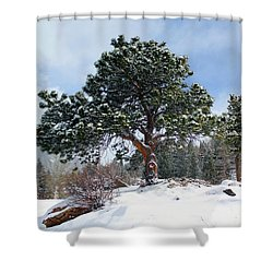 Shower Curtain featuring the photograph A Fresh Blanket Of Snow by Shane Bechler