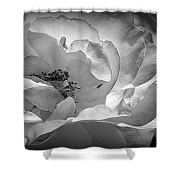 Shower Curtain featuring the photograph A Garden Treasure by Lori Seaman