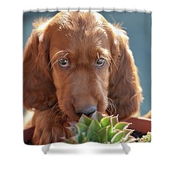 A Gardener Shower Curtain