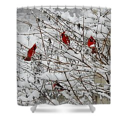 Shower Curtain featuring the photograph A Garthering by Brenda Bostic