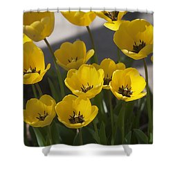 A Gathering Of Tulips Shower Curtain by Morris  McClung