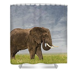 Shower Curtain featuring the photograph A Gentle Giant by Sandra Bronstein