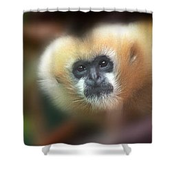 A Gibbon's Stare Shower Curtain
