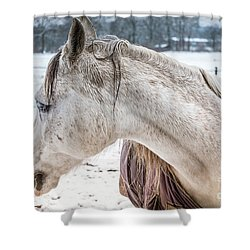A Girlfriend Of The Horse Amigo Shower Curtain