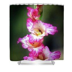 A Gladiolus Shower Curtain