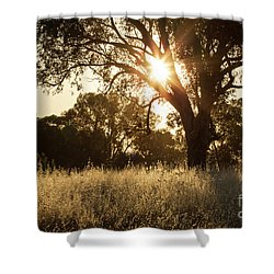 Shower Curtain featuring the photograph A Golden Afternoon by Linda Lees