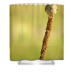 Shower Curtain featuring the photograph A Great Sense Of Balance IIi by John De Bord