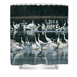 A Group Of Egrets, Herons,  Ibises Shower Curtain