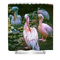 a group of swans near the pond on a Sunny summer day Shower Curtain