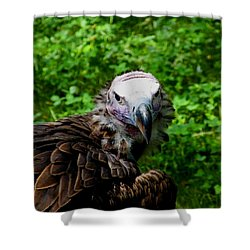 A Happy Vulture Shower Curtain