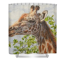 A Higher Point Of View Shower Curtain