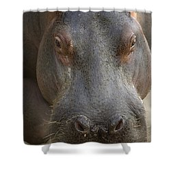 A Hippopotamus At The Sedgwick County Shower Curtain by Joel Sartore