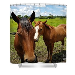 A Horse's Touch Shower Curtain