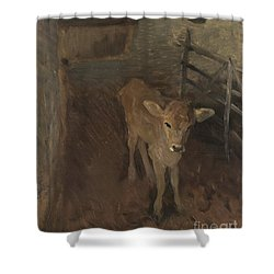 A Jersey Calf, 1893 Shower Curtain by John Singer Sargent