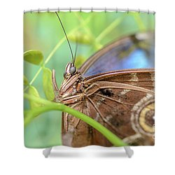 Blue Morpho Butterfly Shower Curtain