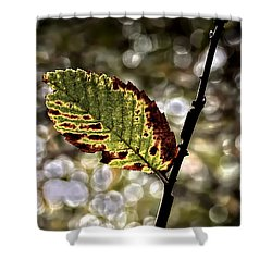 A Leaf Shower Curtain