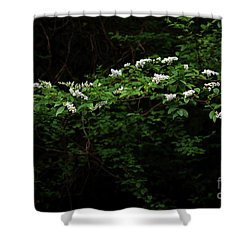 Shower Curtain featuring the photograph A Light In The Darkness by Skip Willits