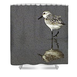 A Little Bird On A Beach Shower Curtain