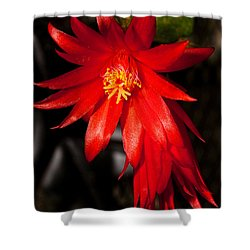 A Little Fire Shower Curtain by Christopher Holmes