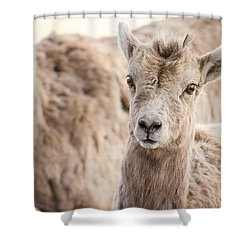 Shower Curtain featuring the photograph A Little Lamb Cuteness by Yeates Photography