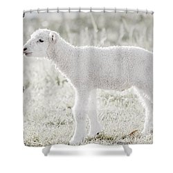 A Little Lamb Shower Curtain