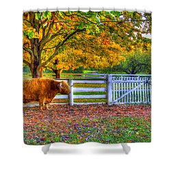A Little Shaker Bull Shower Curtain