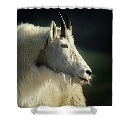 A Little Slip Of The Tongue Shower Curtain