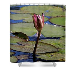 Shower Curtain featuring the photograph A Lonely Vigil by Michiale Schneider