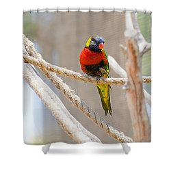 A Lorikeet From The Rainforest Shower Curtain