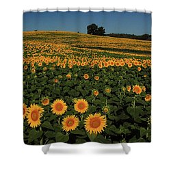 Shower Curtain featuring the photograph A Lot Of Birdseed  by Chris Berry