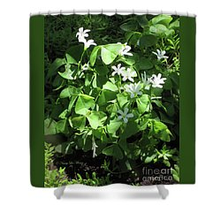 Shower Curtain featuring the photograph A Lovely Spot For Shamrocks by Nancy Lee Moran