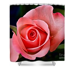 A Loving Rose Shower Curtain