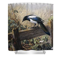A Magpie Observing Field Mice Shower Curtain
