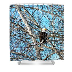 Shower Curtain featuring the photograph A Majestic Bald Eagle by Will Borden