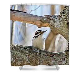 Shower Curtain featuring the photograph A Male Downey Woodpecker  1111 by Michael Peychich