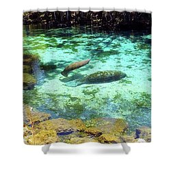 A Manatee Calf And Cow  Shower Curtain
