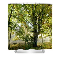 A Misty Fall Morning Shower Curtain
