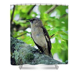 A Mockingbird Song Shower Curtain