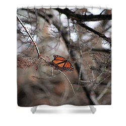 A Monarch For Granny Shower Curtain